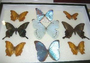 Sala de entomología