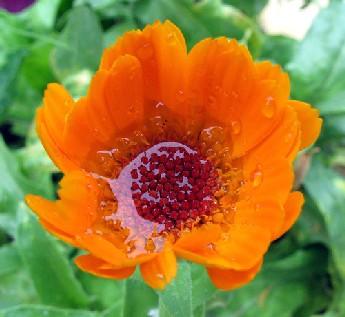 Canción a la flor
