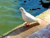 Cuento: El día que la Paloma de la Paz fue al veterinario